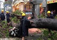 Người đi đường ở Sài Gòn lại bị cây đè trọng thương