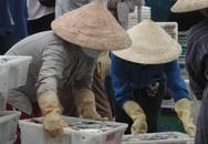 Cá biển dần trở lại các chợ miền Trung