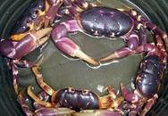 Những loại cua biển không thể ăn nếu muốn giữ mạng sống