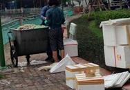 Xuất hiện một số người dân đóng thùng xốp, dùng bao tải đựng cá chết Hồ Tây mang đi