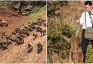 600 con khỉ phá hoại nhà dân, tấn công du khách