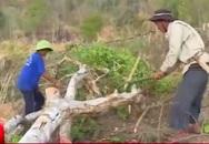 """Phóng sự phá rừng của VTV24: Quay được cảnh nhận tiền, bảo kê, sao chặt cây phải """"dựng""""?"""