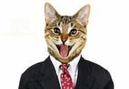 Bức ảnh mèo kỳ lạ khiến người đăng bị khoá Facebook