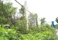 53 tỷ đồng/năm để cắt cỏ Đại lộ Thăng Long, cỏ vẫn um tùm!