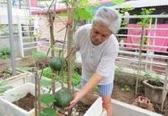 Gia đình Hà Nội kỳ công trồng đu đủ sai quả trên sân thượng