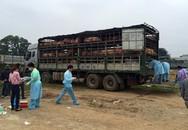 Gần 200 con lợn lở mồm long móng suýt được tiêu thụ