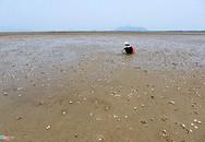 Sau cá đến ngao nuôi chết trắng đầm ở Hà Tĩnh
