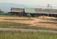 """Phản hồi bài """"Nhà máy gỗ dăm không phép lại thách thức tỉnh Nghệ An"""": Chỉ đạo các ngành liên quan kiểm tra, xác minh"""