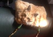Túi nhồi bông đầu mèo chết gây tranh cãi ở New Zealand