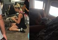 Hành khách sốc khi ngồi cạnh lợn trên máy bay