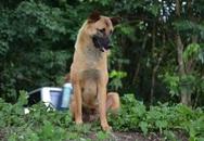 Chó bị xe cán chết tại nơi nằm đợi chủ một năm qua