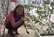 Mẹ 8X trồng hàng loạt chậurau sạch sau khi con bị ngộ độc