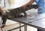 Cảnh tượng rùng mình bên trong một trang trại cá sấu ở Việt Nam lên báo nước ngoài