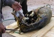 Món hải cẩu nhồi chim chết thử lòng can đảm thực khách