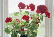 7 loại cây trồng trong nhà giúp bạn vui vẻ