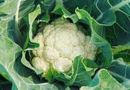 5 loại rau xanh trời càng lạnh càng tươi tốt