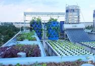 Khu vườn xanh tốt trên sân thượng của người phụ nữ bỏ việc IT về làm vườn