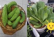 Đột nhập vườn rau trăm loại của mẹ trẻ 8X Sài Thành