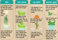10 loại rau củ trồng từ gốc bỏ đi, lớn nhanh vùn vụt, ăn cả năm chả hết
