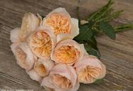 Loài hoa hồng giá triệu đô/1 bó rớt giá thảm hại sau 10 năm ra mắt