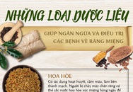 TS. Nguyễn Phú Hòa: Ngăn ngừa bệnh răng miệng, chăm sóc răng lợi từ gốc bằng dược liệu
