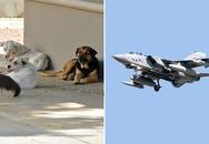 Máy bay chiến đấu hỏng nặng vì đâm phải chó