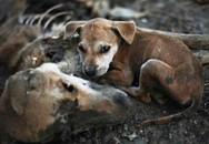 Những câu chuyện liều mình cứu con của loài vật khiến cả thế giới sững sờ