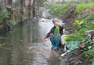 Rùng mình cảnh rửa rau ở rãnh nước thải đầy phân