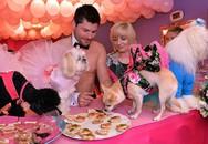 Chi gần 200 triệu để tổ chức tiệc cho cún cưng
