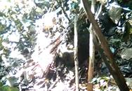 Xác nữ sinh lõa thể được phát hiện trong rừng
