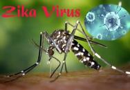 Người phụ nữ Hàn Quốc nhiễm virus Zika từ Việt Nam từng sống ở đâu tại nước ta?