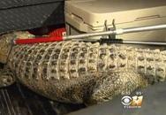 Cá sấu dài hai mét lang thang trong trường học Mỹ