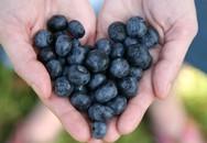 8 thực phẩm nhất định phải ăn để tim khỏe mạnh