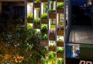 Căn nhà nhìn đâu cũng thấy cây xanh với bể bơi dài 9m ở Đà Nẵng