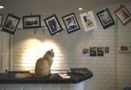 Khách sạn xa xỉ cho mèo đầu tiên trên thế giới
