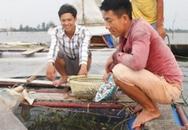 Bỏ lương 9 triệu về làng nuôi cá lồng muốn lãi 200 triệu/năm