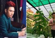 Bận rộn như thế nhưng căn hộ của hai NTK nam nổi tiếng này vẫn ngập sắc hoa và rau xanh