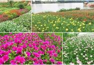 Vườn hoa mười giờ rực rỡ ven sông của chàng trai học kiến trúc mê hoa