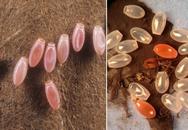 Lập tức dọn dẹp sạch nhà ngay nếu phát hiện những hạt nhỏ này trong nhà