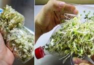 Cách làm giá đỗ trong chai nhựa cực nhanh, cực dễ cho nhà có giá sạch ăn quanh năm