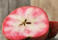 """Mê mẩn loại táo Mỹ lạ """"xanh vỏ - hồng lòng"""""""