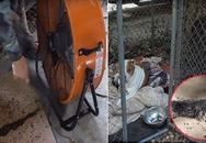 Dùng chó cưng làm mồi và chỉ hai chiếc quạt, chàng trai giết được 4000 con muỗi mỗi đêm
