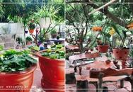"""Khu vườn 200 giỏ hoa rực rỡ của mẹ Hải Dương khiến khách đến chỉ muốn """"ở mãi không về"""""""