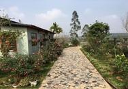 Ngôi nhà cấp 4 được cả vườn hồng bao quanh cực thơ mộng ở Phú Thọ