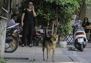 Chủ vẫn vô tư thả rông chó sau quy định xử phạt