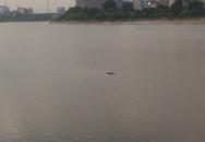 Phát hiện thi thể nam thanh niên nổi giữa hồ Linh Đàm