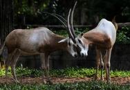 Vinpearl Safari tích cực xây dựng quy chuẩn đánh giá phúc lợi động vật
