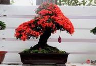 Chơi hoa Tết 2018, không thể bỏ qua những chậu bonsai siêu đẹp này
