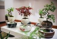 Phát sốt với nhiều loại cây cảnh độc lạ, hút khách năm Gà vàng