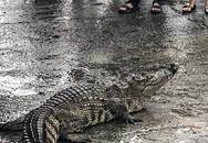 Bịt miệng cá sấu bằng băng keo, đưa ra giữa chợ bày bán